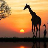 Op avontuur in Afrika