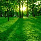 Green Sequence
