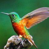 Programa 98 – Minis sobre colibríes – 1er. Bloque