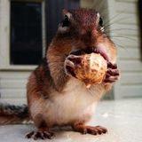 Chestnut - I'm Going Nuts / DJ-MIX