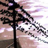 THE BIRDS!! mix