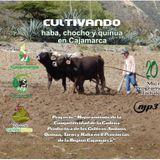 5. Labores culturales en quinua