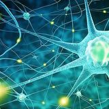 THE PEAK Neurologick