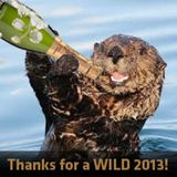 TRAVISWILD's Animal Kingdom Radio 011 - Sea Otter (2013 Special)