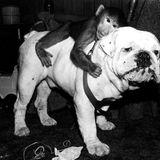 Monkey on the Dog mix