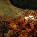 Fayachichou -Autumn 2014- (n°29)