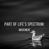 Part of life's spectrum: Movement