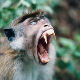 Ibiza Techno 2016 1st mix 'Metal Monkey'