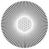 Alpha Waves:Psy-Trance