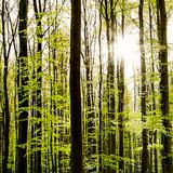 Šuma peva na Radioaparatu uvodna jesenja epizoda