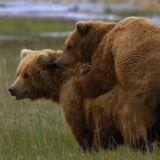 Bear Growls Live June Mix