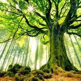 Chill Tree