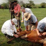 Carlos Fuellis, director de la División de Sanidad Animal sobre los tratamientos de garrapatas