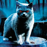 Pet Sematary (Part Five)