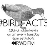 Birdmaster Kevin - RWD.FM Broadcast 6/16/2015
