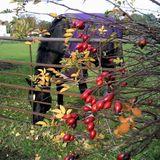 Martin Newell Oddcaste 45  An Autumn Horse