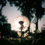 Wildflower.K