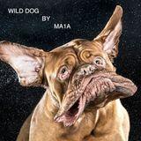 WILD DOG BY MA1A