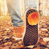 another autumn