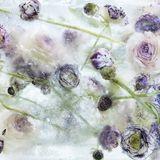 MELT THE ICE AWAY.......(1961 - 2000)
