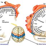 Theory – PG  – Nervous System  Part 4