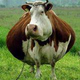 KÜTE presents 'Grande Mucca (Big cow)' mixed live by Danny 'Flip Jones