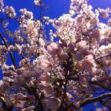 Spring Fever Mix 2013