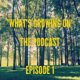 What's Growing On - Episode 1