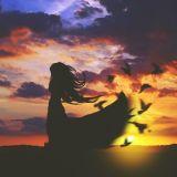Giấc mơ của chim Kiwi || Lynh Miêu