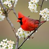 The Red Cardinal Easterfruitloopin mix