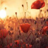 """I see your lights"" - Remembering World War I"