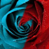 'Roses are Red, Violets are Blue...It's no problem for me, but it's a problem for you!'