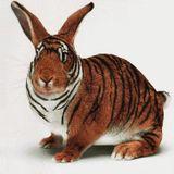 Jose Maria Ramon @ Bunny Tiger Special - Grial Ibiza - Sept 13
