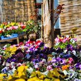 مهرجان الربيع