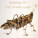Message of the Grasshopper