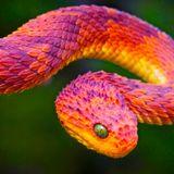 Snakes #26 - 20/04/12 - on RadioBasePopolare