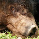 """Bear Rock"" snapshot of my latest Ollies Rock Block... 25 mins commemorating AnimalsAsia.org"