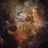 #OnMeowWay2StealYourGirl (Astronaut Cult's Banff TakeOver Mix)