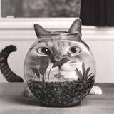 Bowl Of Soul