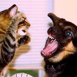 Episode 4: Cats vs. Dogs