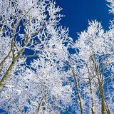 Winter Sun Extravaganza
