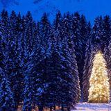 Vem älskar en gran när det inte är jul?