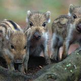 Für TIERCHUTZ als Unterricht in den Schulen - For animal protection as school lessons