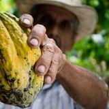 Alter-Nativo Latino: Colombia