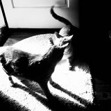 Resonance.fm - Catfight # round 1