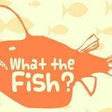 What The Fish - Episode 4