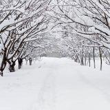 Winter's Soulstice