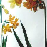Daffodils for Phaedra
