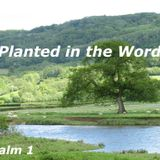 Delighting in the Word