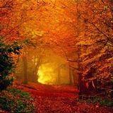 Ambiosis 4 - Autumn's Glow